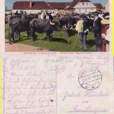 Tipuri  (Sibiu, Hermannstadt) -Targ de bivoli -rara, Circulata, Printata