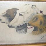 Pictura, Animale, Ulei, Altul