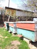Vând stupi cu albine în jud. Dolj