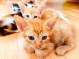 Ofer cadou pisicute vaccinate