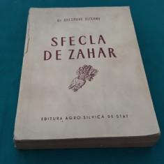 SFECLA DE ZAHĂR/ DR. GHEORGHE OLTEANU/ 1954