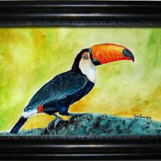 Acuarela Tucan (tablouri tablou picturi pictura grafica decor), Pasari, Realism