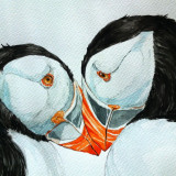 Pictura in acuarela - dragoste pufina, Pasari, Realism