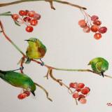 Pictura in acuarela - coacaze rosii si pasari verzi, Realism