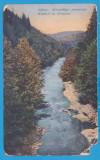 CARTE POSTALA - NADRAG, JUD. TIMIS - PERIOADA AUSTROUNGARA, PARAUL DIN PADURE, Necirculata, Printata