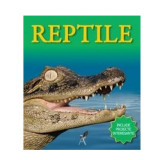 Reptile | Belinda Weber