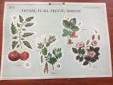 Material didactic - plansa scolara perioada comunista / Frunze Flori Frunze ...
