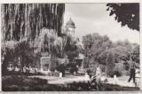 Bnk cp Radauti - Vedere din parc - necirculata, Printata