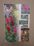 PLANTE DE INTERIOR-PAULINA  ANASTASIU