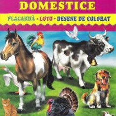 Animale domestice - Placarda, Loto, Desene de colorat