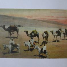 Carte postala Egipt-Caravana de camile circa 1900