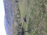 Tuica de vanzare