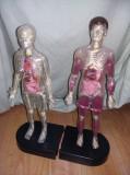 Machetele corp didactic Corpul Uman,Colectia Explorand Corpul Uman-Deagostini