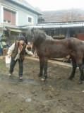 Cal frumos
