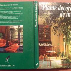 Plante decorative de interior - Ursula Kruger - Carte gradinarit