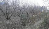 500mp de teren cu livada, Teren intravilan