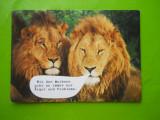 HOPCT 35684  AFRICA DE SUD LEUL REGELE ANIMALELOR !!/ LEU-NECIRCULATA, Printata