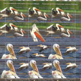 LP 2062-Pelicani 2015-Minicoli stampilate, Stampilat