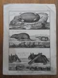 "BERNARD DIREXIT, GRAVURA ""HISTOIRE NATURELLE"", 1789, Abstract, Cerneala"