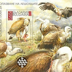 Bulgaria 2010 - Pasari, vultur, colita neuzata