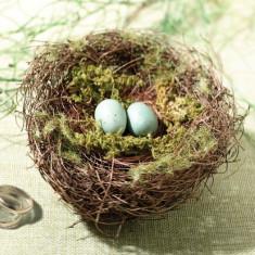 Moss, Bird Holder Nest Ring