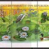 Moldova 2008 - Fauna-flora, bloc neuzat