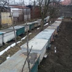 Vand stupi cu familii de albine - Apicultura