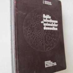 Bolile infectioase ale animalelor domestice -  I. Popovici , L. Stamatin
