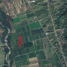 Livada de meri si pruni in Voinesti Dambovita - Teren de vanzare, 10500 mp, Teren extravilan