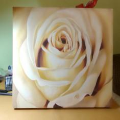 Tablou Trandafir, Flori, Ulei, Realism