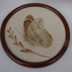 Frumos fluture fixat intr-un tablou