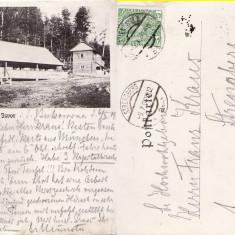Bucovina (Suceava ) - Izvor -clasica - Carte Postala Bucovina pana la 1904, Circulata, Printata