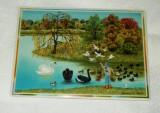 Carte Postala  - de colectie - Villeroy and Boch - Primavara