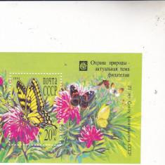 Colita rusesc flori si fluturi