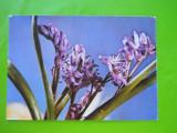 HOPCT 29970   FELICITARE FLORI  -NECIRCULATA