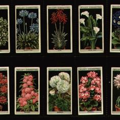 1925 Flori de cultura in ghivece - 50 cartonase reclama tigari Wills Trade Card - Cartonas de colectie