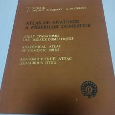 ATLAS DE ANATOMIE A PASARILOR DOMESTICE - V. GHETIE