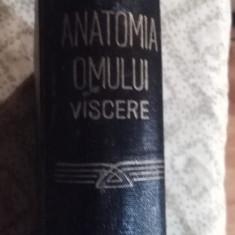 ANATOMIA OMULUI, VISCERE