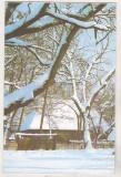 Bnk cp Felicitare necirculata - peisaj  de iarna