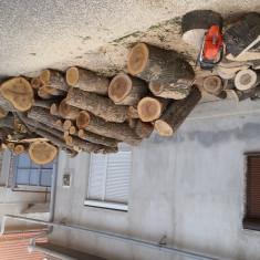 Tai lemne pentru foc cu drujba 0772045011
