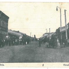 4201- ALEXANDRIA, street Carol - old postcard, CENSOR - used - 1917 - Carte Postala Muntenia 1904-1918, Circulata, Printata