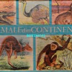 Animale din continente i. nicolau - Carte educativa