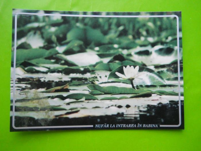 HOPCT 35193  NUFAR LA INTRAREA IN BABINA  -DELTA DUNARII-JUD TULCEA-NECIRCULATA foto mare