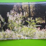HOPCT 35162 PARADISUL FLORILOR SALBATICE-DELTA DUNARII-JUD TULCEA-NECIRCULATA - Carte Postala Dobrogea dupa 1918, Printata