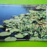 HOPCT 35190 NUFERI LA MARGINE DE PLAUR -DELTA DUNARII-JUD TULCEA-NECIRCULATA - Carte Postala Dobrogea dupa 1918, Printata