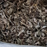 Etnobotanice constanta 2018