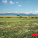 Teren Sercaita - Teren de vanzare, 25000 mp, Teren intravilan