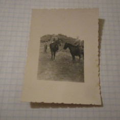 Foto mica cai cu calareti cp16 - Fotografie, Alb-Negru, Natura, Romania de la 1950