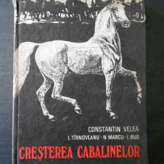 C. VELEA - CRESTEREA CABALINELOR
