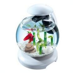 Acvariu pentru pești betta sau caracas - sferic 6, 8 L - Acvariu si terariu Tetra